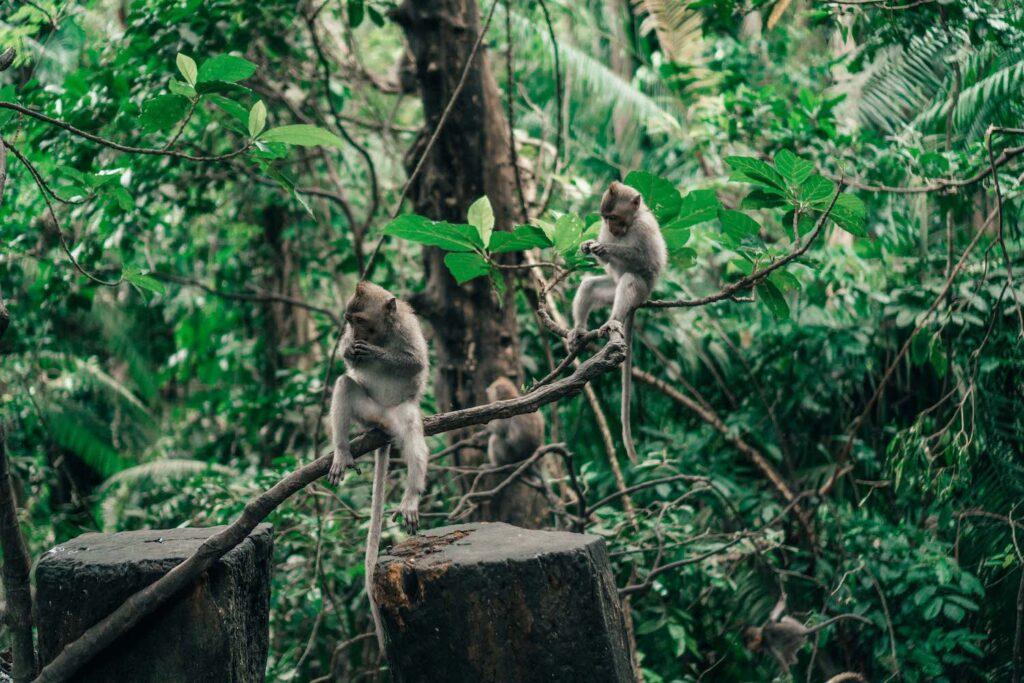 Offbeat Escapades - Bali Budget Travel Guide