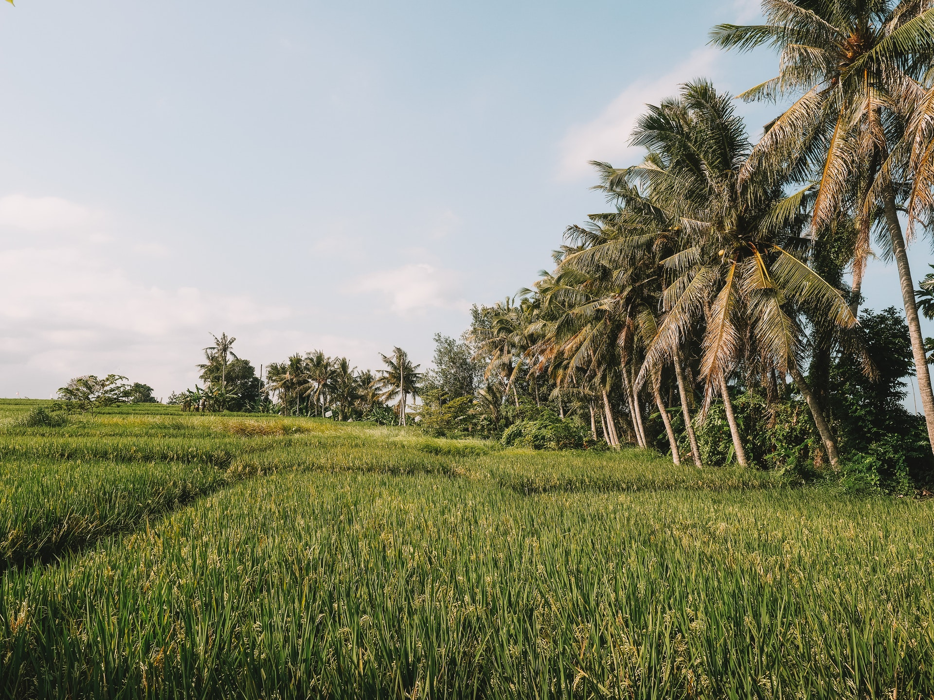 Offbeat Escapades - Where to Stay in Bali