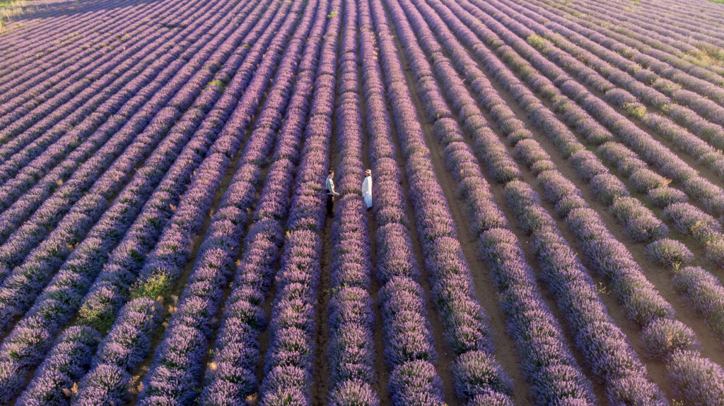 Offbeat escapades-lavender fields in provence-lavender fields in france-0524